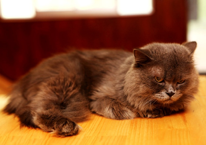 chu-meo-u-lan-tai-cafe-doremon-cat