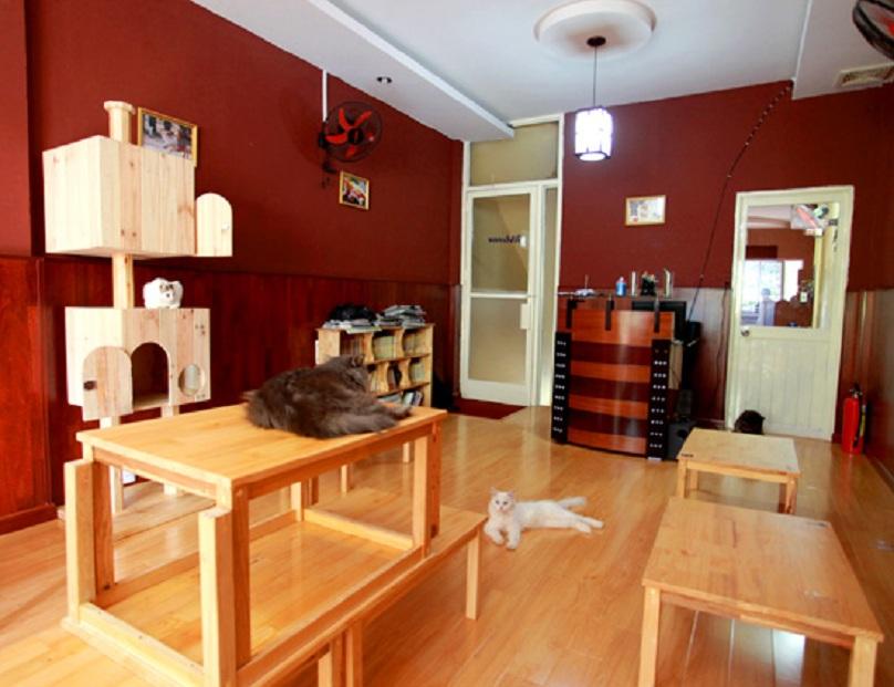 khong-gian-quan-cafe-doremon-cat