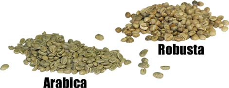 5 loại cafe thường dùng